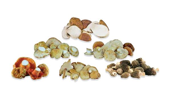 Wild Mushroom Sampler