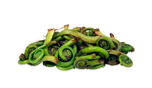 fresh-fiddlehead-ferns