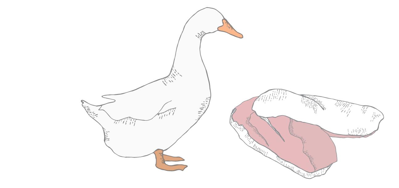 moulard duck illustration